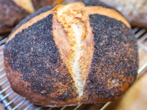 White poppy seed cob